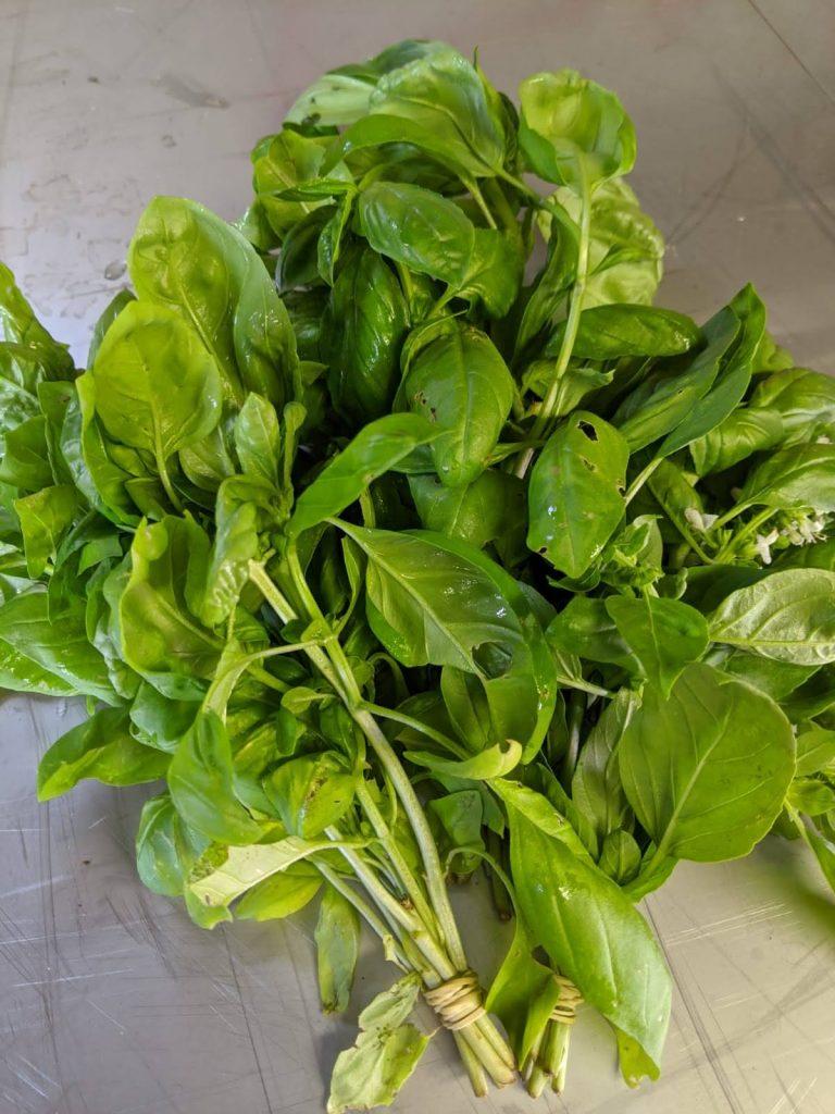 Basilic frais Demain au jardin